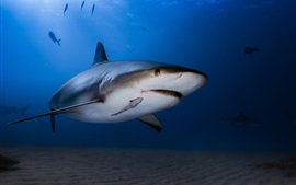 Preview wallpaper Underwater, sea, shark