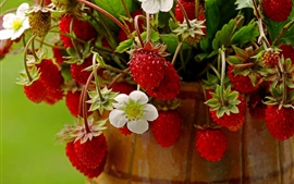 Preview wallpaper Unripe strawberry, flowers