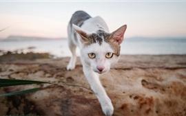 White cat front view, walk, sea