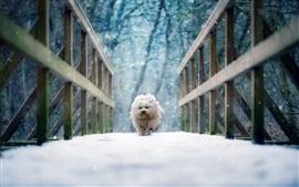 Perro blanco caminar sobre puente, nieve, invierno