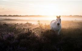 Cavalo branco, arbustos, nevoeiro, manhã