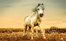 Белая лошадь, цветы, забор, лето