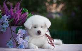 Preview wallpaper White puppy and flowers