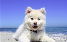 Preview wallpaper White puppy, front view, sea, beach