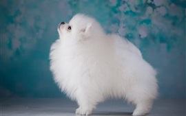 White puppy side view, furry