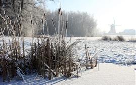 Invierno, juncos, nieve, molino de viento