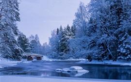 Hiver, neige, rivière, pont, arbres, parc