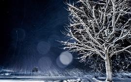 Invierno, árbol, cubierto de nieve, noche