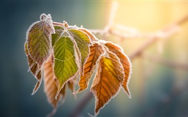 Preview wallpaper Yellow leaves, frost, autumn