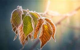 Желтые листья, мороз, осень