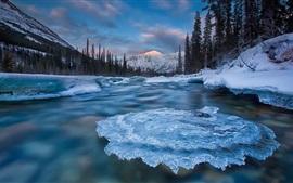 Yukon, Canadá, gelo, rio, árvores, inverno