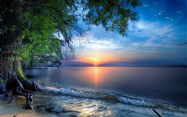 Austria, Lake Constance, water, trees, sunrise