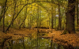 Preview wallpaper Autumn, trees, leaves, stream