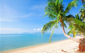 Preview wallpaper Beach, palm trees, sea, tropical, summer