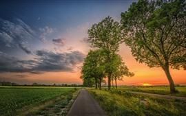 Beaux champs, campagne, route, arbres, nuages, coucher de soleil