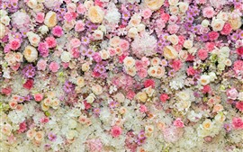 Preview wallpaper Beautiful flowers background, pink rose and daisy, peony