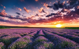 Preview wallpaper Beautiful lavender field, flowers, summer, sunset