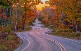 Bend road, trees, autumn