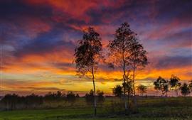 Vidoeiro, árvores, nuvens, pôr do sol