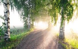 Abedul, árboles, camino, rayos de sol, niebla, mañana