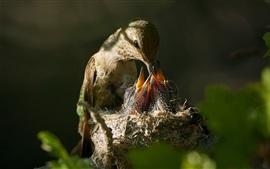 Птица кормит маленьких птиц
