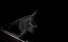 Gato preto, escrivaninha, escuridão