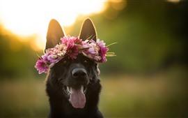 Black dog, face, wreath