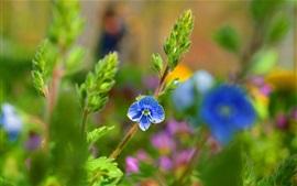 Blue flower, plants