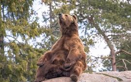 壁紙のプレビュー 茶色のクマは石に座る
