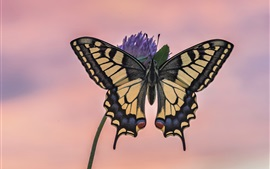 Borboleta, asas, flor