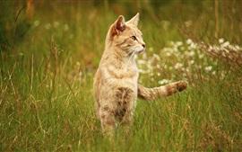 Gato en la hierba, cola, mirada