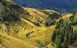 Китай, округ Лонгшэн, прекрасное рисовое поле, сельская местность