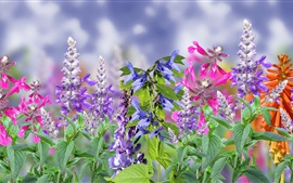 Preview wallpaper Colorful flowers, pink, purple, red