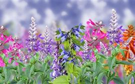미리보기 배경 화면 다채로운 꽃, 핑크, 퍼플, 레드