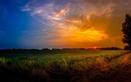 Campo, campos, árboles, puesta del sol