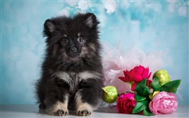 Preview wallpaper Cute puppy and flowers