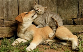 Preview wallpaper Dog and cat, friendship