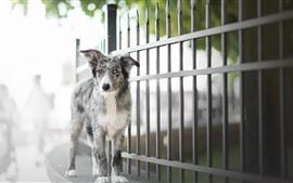 Собака, забор, боке