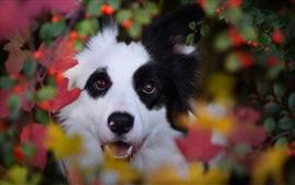 Собака, листья, осень, боке