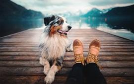 Perro, muelle, pie