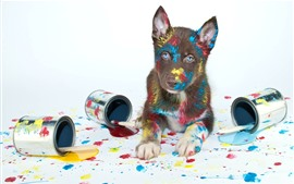 Dog play paint, colorful