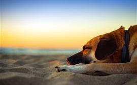 Собака спящая, пляж, пески