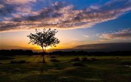 Preview wallpaper England, Fritham, beautiful sunset, tree, grass, clouds