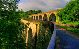 England, Shropshire, trees, bridge, road