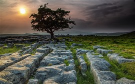 Preview wallpaper England, Yorkshire Dales, trees, stones, sunset