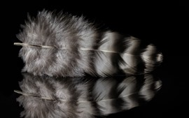 Preview wallpaper Feather, reflection, black background