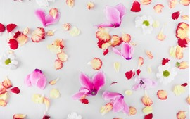 Preview wallpaper Flower petals background