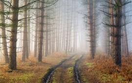 Floresta, árvores, caminho, neblina