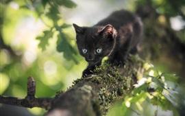 Gatinho preto peludo, olhos azuis, árvore