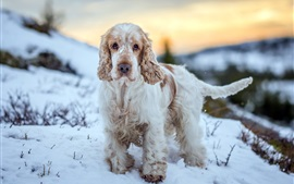 Preview wallpaper Furry dog, snow, winter, slope